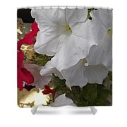 Red And White Petunias Shower Curtain