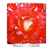 Red And White Rose In Puerto Varas-chile Shower Curtain