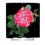 Red And White Rose In Rain Shower Curtain