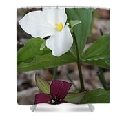 Red And White Trillium Shower Curtain