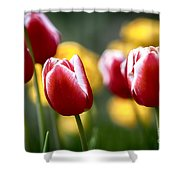 Red And White Tulips Large Canvas Art, Canvas Print, Large Art, Large Wall Decor, Home Decor Shower Curtain