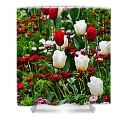 Red And White Tulips With Red And Pink English Daisies In Spring Shower Curtain
