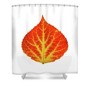 Red And Yellow Aspen Leaf 10 Shower Curtain
