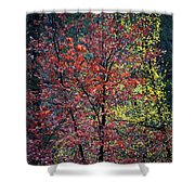 Red And Yellow Leaves Abstract Vertical Number 1 Shower Curtain