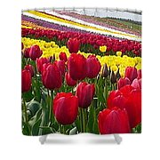 Red And Yellow Tulip Fields Shower Curtain