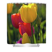 Red And Yellow Tulips Closeup Shower Curtain