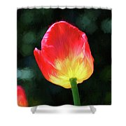 Red And Yellow Tulip - Photopainting Shower Curtain