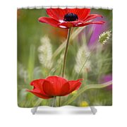Red Anemone Coronaria In Nature Shower Curtain