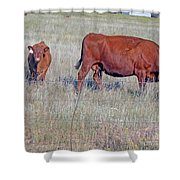 Red Angus Cow And Calf Shower Curtain