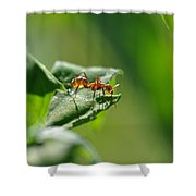 Red Ant On Leaf Shower Curtain