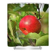 Red Apple On A Tree Shower Curtain