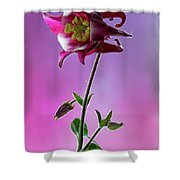 Red Aquilegia 2 Shower Curtain