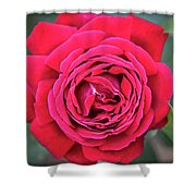 Red As A Rose  Shower Curtain