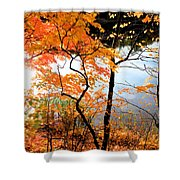 Red Autumn Leaves 5 Shower Curtain