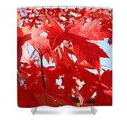 Red Autumn Leaves Art Prints Canvas Fall Leaves Baslee Troutman Shower Curtain