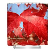 Red Autumn Leaves Fall Art Colorful Autumn Tree Baslee Troutman Shower Curtain