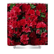Red Azalea Blooms Shower Curtain