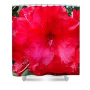 Red Azaleas Flowers 4 Red Azalea Garden Giclee Art Prints Baslee Troutman Shower Curtain