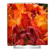 Red Azaleas Orange Azalea Flowers 9 Floral Giclee Art Prints Baslee Troutman Shower Curtain