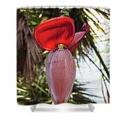 Red Banana Blossom Shower Curtain