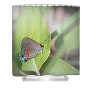 Red-banded Hairstreak Butterfly Shower Curtain