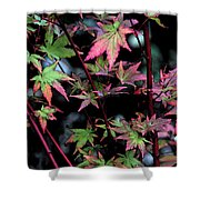 Red Bark Maple  Shower Curtain