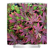Red Bark Maple Leaves  Shower Curtain