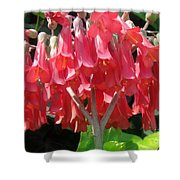 Red Bell Flowers. Sunny Spring Shower Curtain
