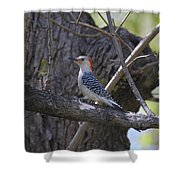 Red Bellied Wood Pecker Shower Curtain