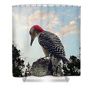 Red-bellied Woodpecker - Tree Top Shower Curtain
