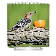 Red-bellied Woodpecker At The Feeder Shower Curtain