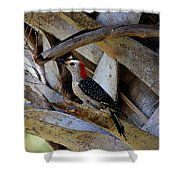 Red-bellied Woodpecker Hides On A Cabbage Palm Shower Curtain