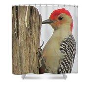 Red-bellied Woodpecker II Shower Curtain