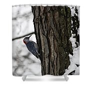 Red Bellied Woodpecker No 1 Shower Curtain