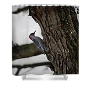 Red Bellied Woodpecker No 2 Shower Curtain