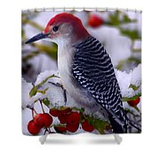 Red Bellied Woodpecker Shower Curtain