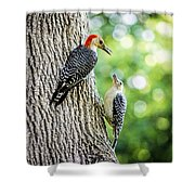 Red-bellied Woodpeckers Shower Curtain