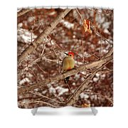 Red Belly Shower Curtain