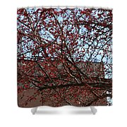 Red Berries In Tree Shower Curtain