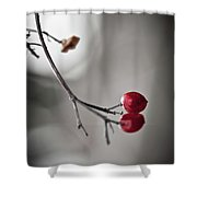 Red Berries Shower Curtain by Mandy Tabatt