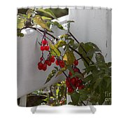 Red Berries On A White Fence Shower Curtain