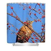Red Berry Robin Shower Curtain