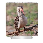 Red Billed Hornbill Shower Curtain