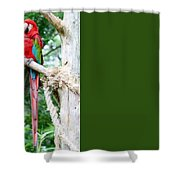 Red Bird And Pink Flowers Shower Curtain