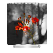 Red Bird Of Paradise Shower Curtain