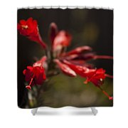 Red Bloom Shower Curtain