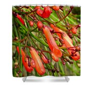 Red Blossoms Of A Firecracker Plant Shower Curtain