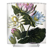 Red, Blue, And White Lotus Flowers Shower Curtain