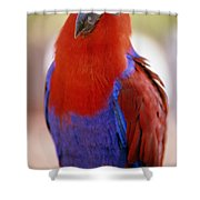 Red Blue Macaw Shower Curtain