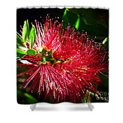 Red Bottle Brush Shower Curtain